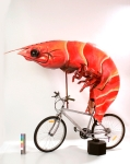 shrimp on bike